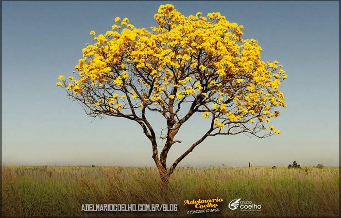 Natureza-do-Nordeste-7-plantas-exclusivas-da-região